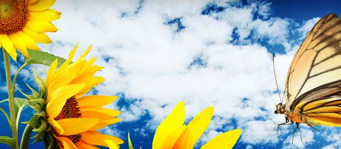 butterfly-sky-yellow-sunflower-website-header